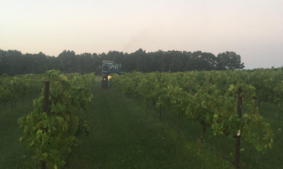 Greene Family Vineyard